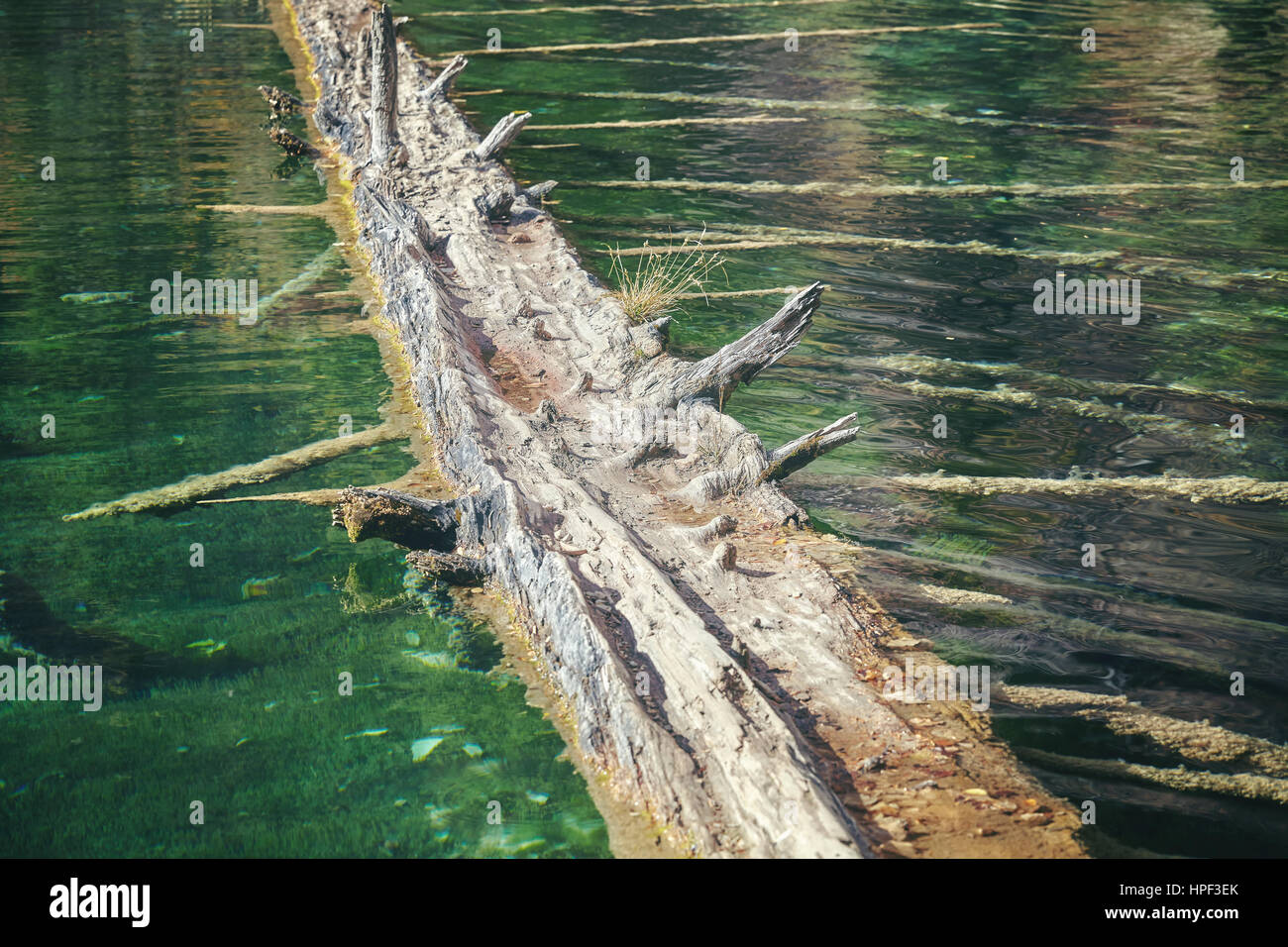 Old floating log, selective focus, color toned image, abstract natural background. Stock Photo