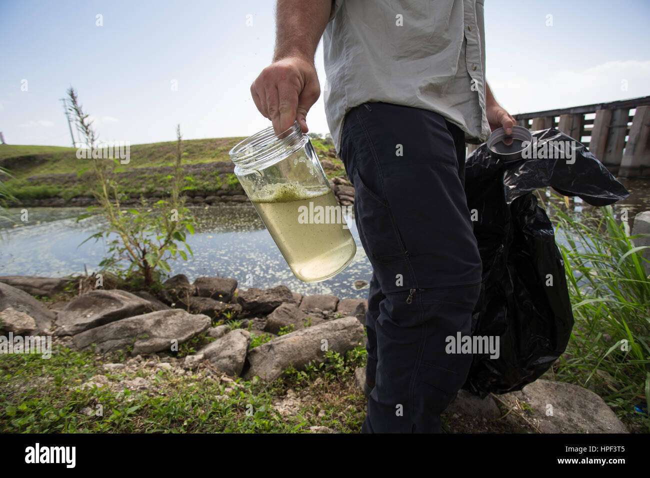 Lake Okeechobee water sample during a blue green algae outbreak in Florida Stock Photo