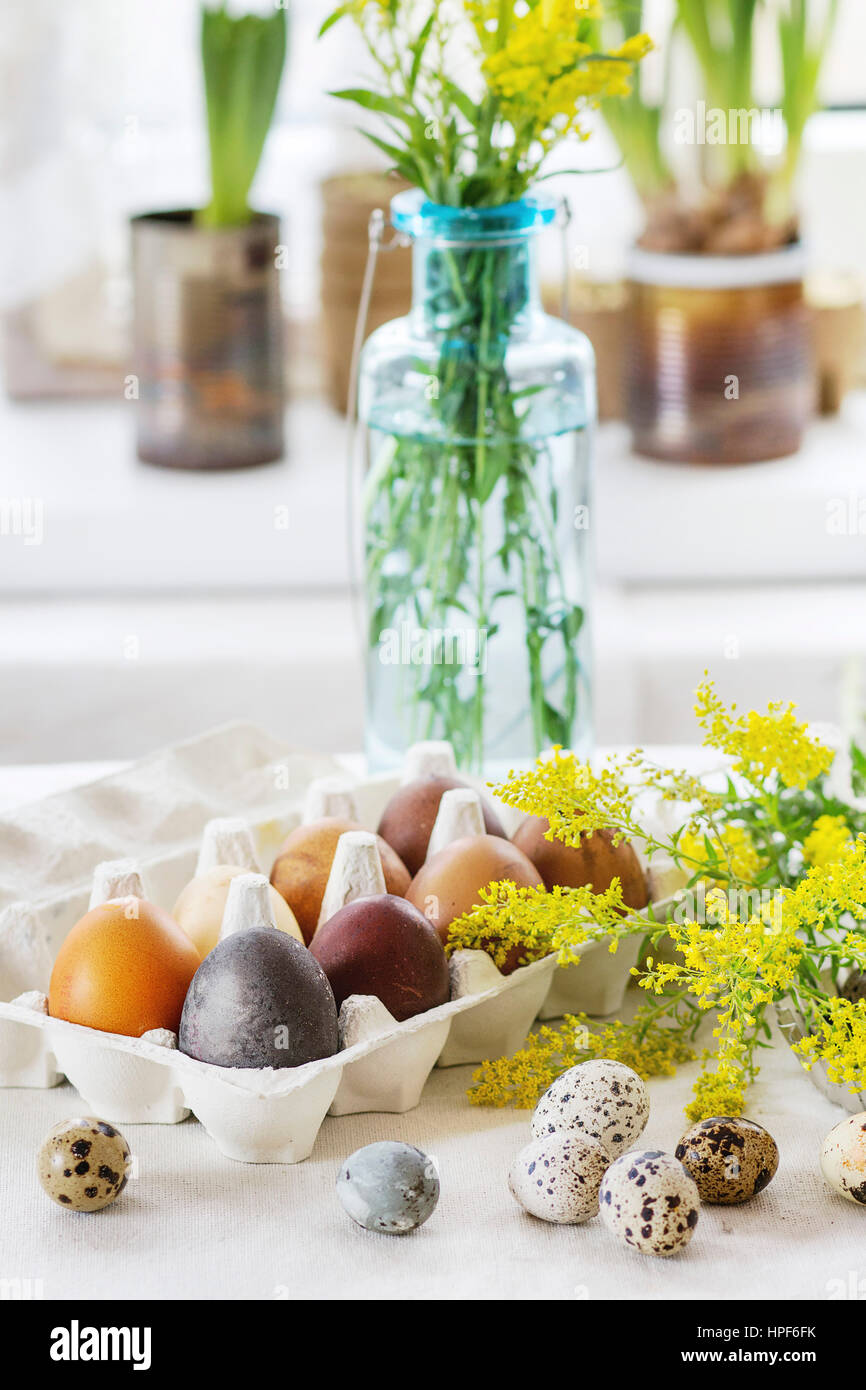 Prepare to Easter. White tablecloth table decorated by colored brown chicken and quail eggs with yellow flowers - Stock Image