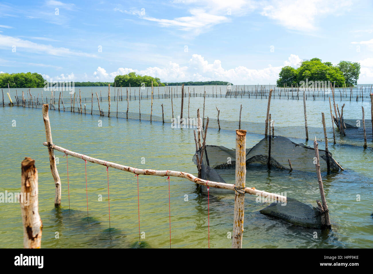 Oyster hatchery in a bay of the caribbean sea - Stock Image