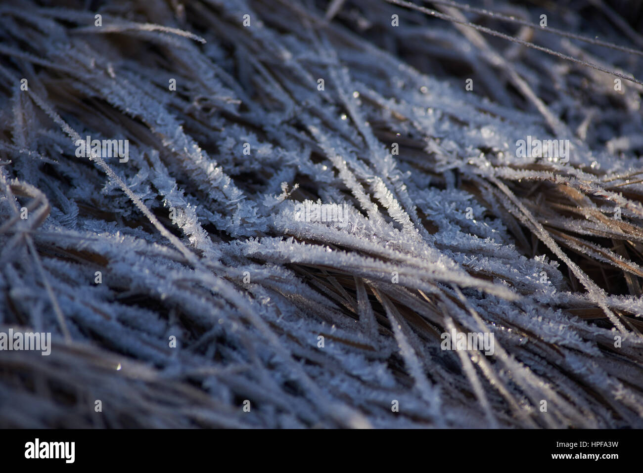 frozen grass Stock Photo
