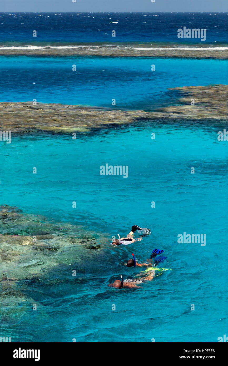 Family, three snorkelers snorkeling on coral reef, Red Sea, Egypt - Stock Image
