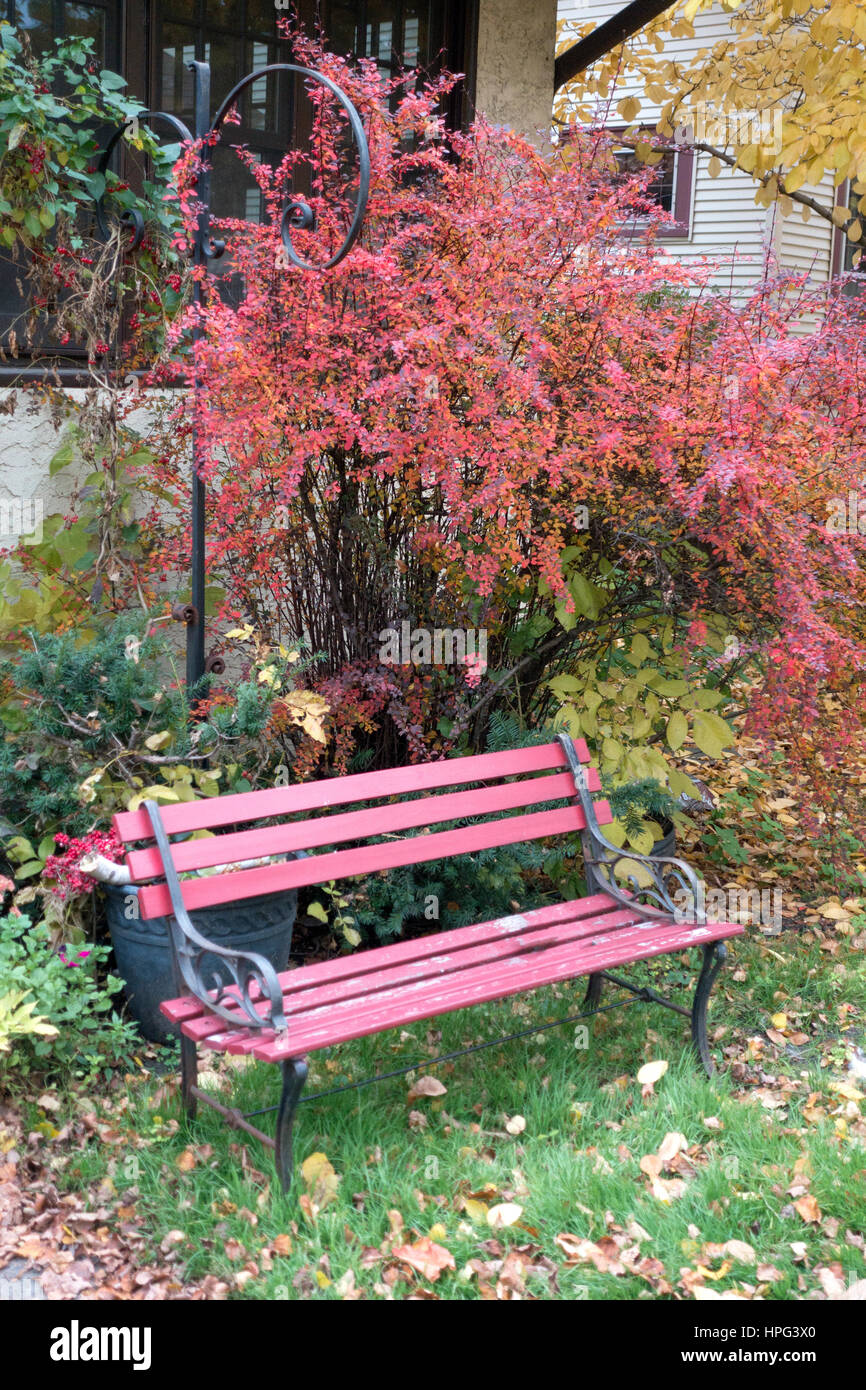 St Paul Minnesota MN USA - lovely red autumn neighborhood day with leaves shrubbery and bench waiting. - Stock Image