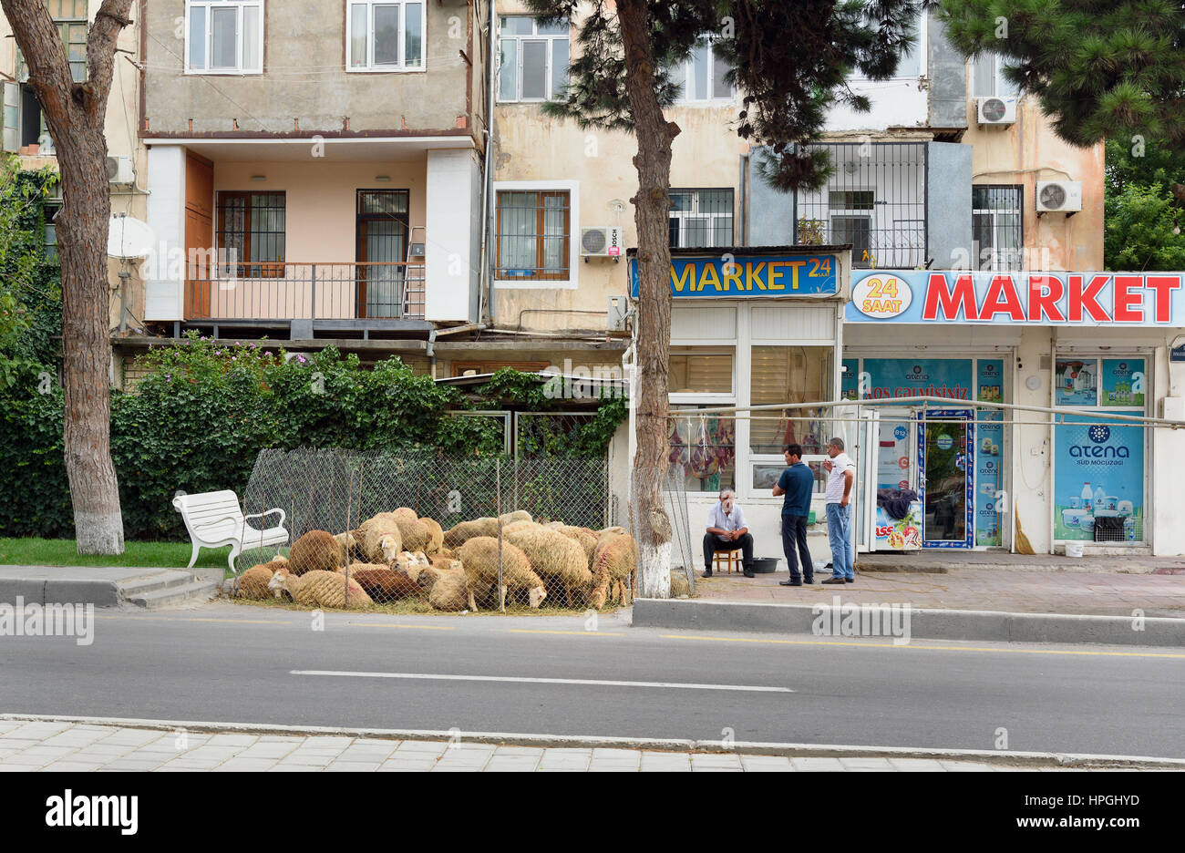 Baku, Azerbaijan - September 11, 2016: People sale sheeps on the street in city during Bakrid festival Eid al-Adha - Stock Image