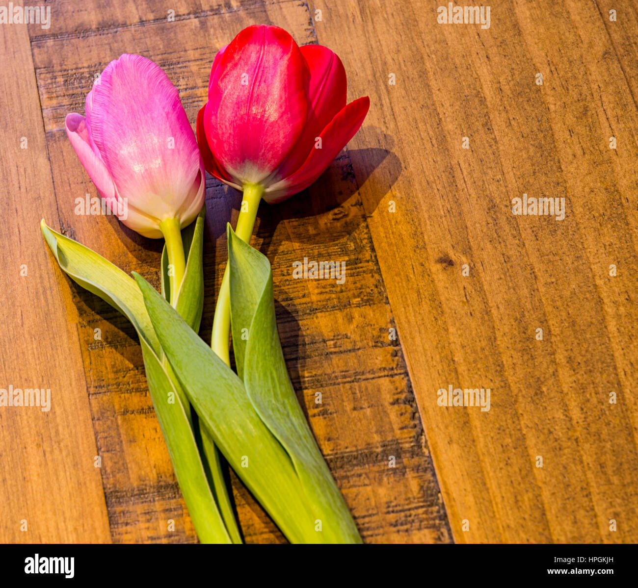 Large beautiful tulip heads flower stock photos large beautiful red and pink tulip on a oak table the tulips have their stems foliage izmirmasajfo