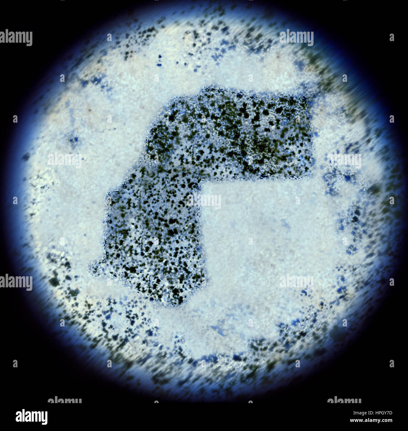 A simulated view through a microscope on bacterias in the shape of Western Sahara.(series) - Stock Image