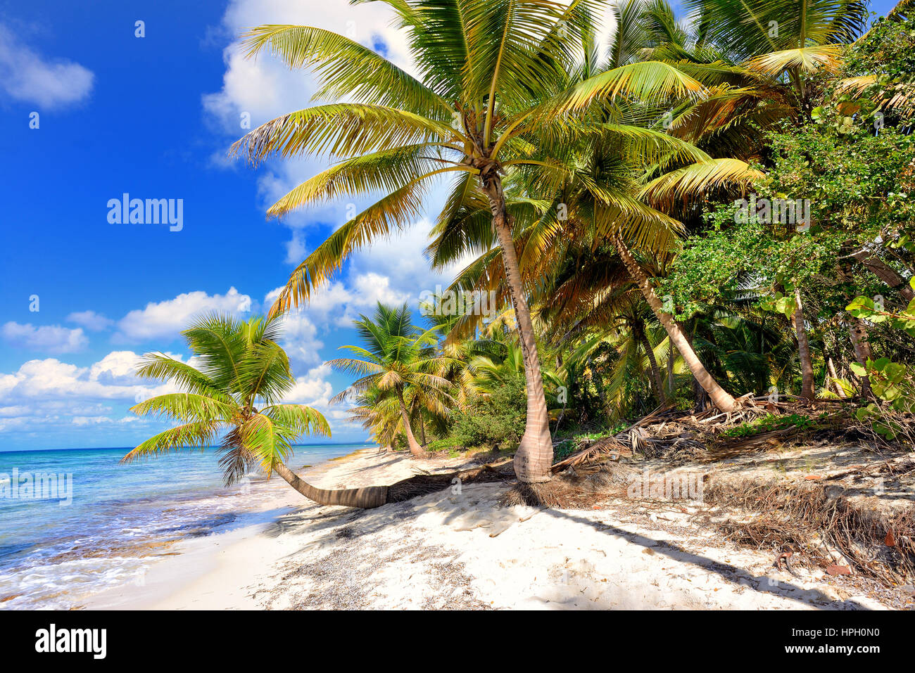 Tropical scenery. Beautiful palm beach with turquoise waters and white sand. Tropical vacations. Relaxing tropical - Stock Image