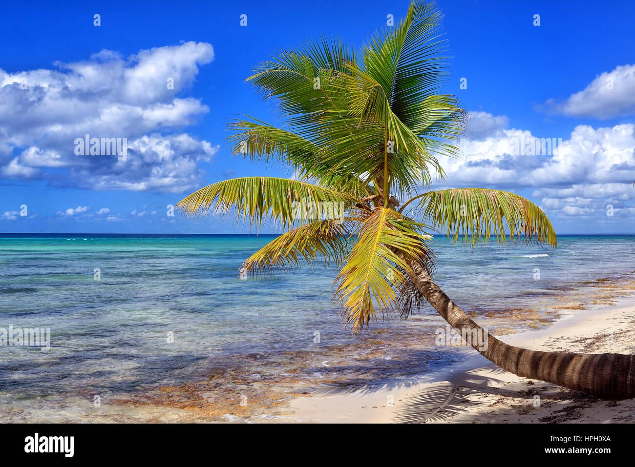 Tropical white sandy beach with palm trees. Saona Island, Dominican Republic Stock Photo