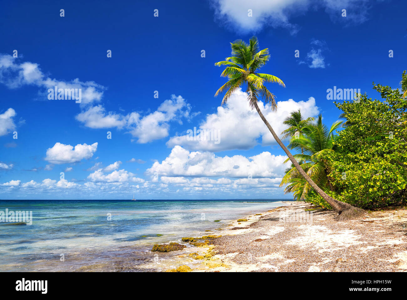 Tropical white sandy beach with palm trees. Saona Island, Dominican Republic - Stock Image