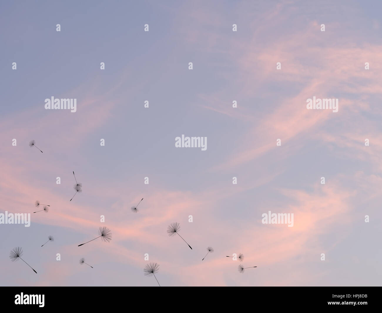 Dandelion seeds and sunset sky,time passing, people passing concept. The end of the day background. - Stock Image