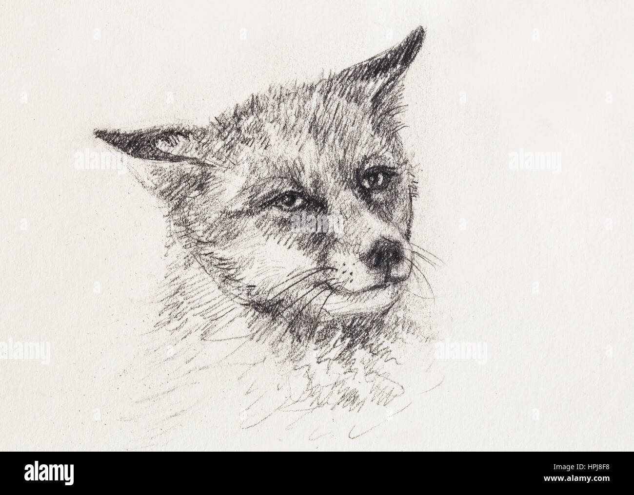 Fox portrait pencil drawing on paper copy space stock photo