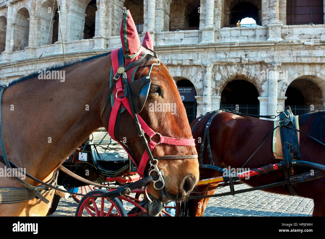 Close up of an horse used to draw the tourist carriage on city tours outside the Colosseum, Colosseo. Rome, Italy, - Stock Image