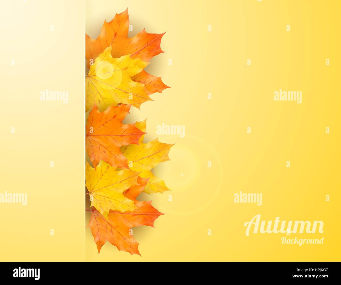 Autumn background with realistic maple leaves vector back to school autumn background with realistic maple leaves vector back to school banner thanksgiving day greeting card m4hsunfo