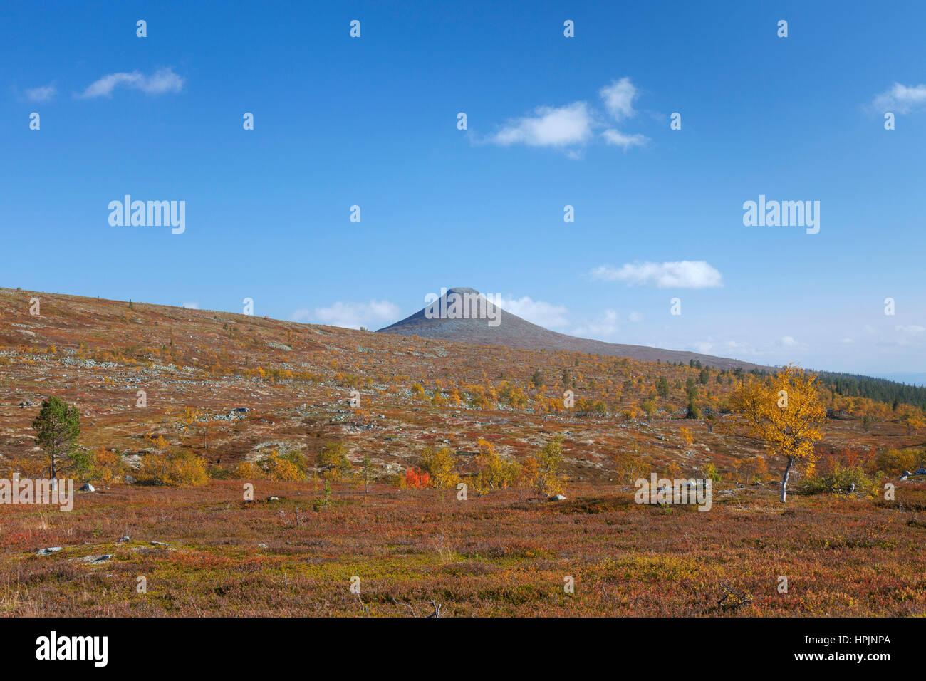 The mountain Nipfjaellet in the Städjan-Nipfjället nature reserve in autumn, Dalarna, Sweden, Scandinavia - Stock Image