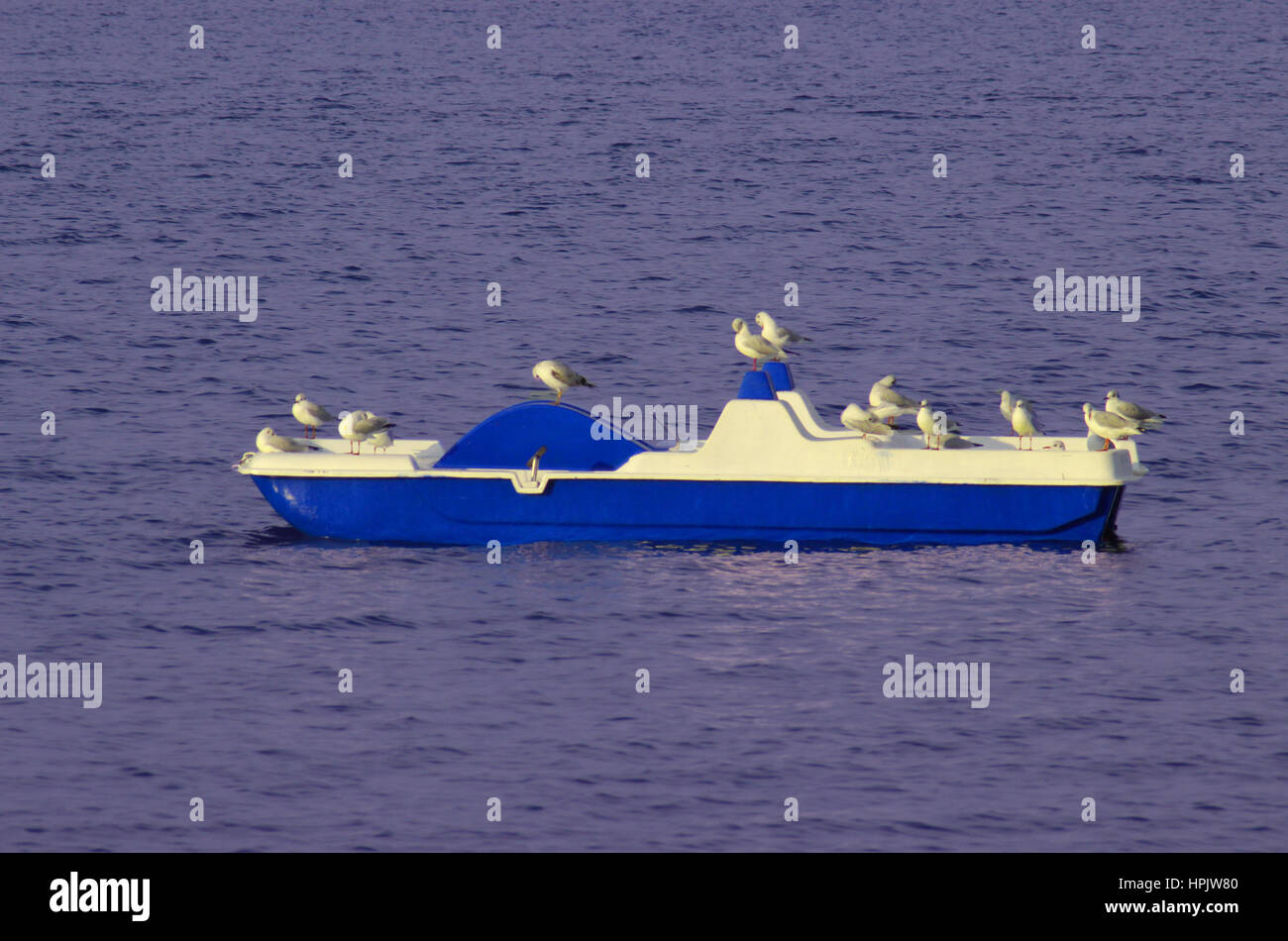 A pedalboat in the sea with seaguls resting on it - Stock Image