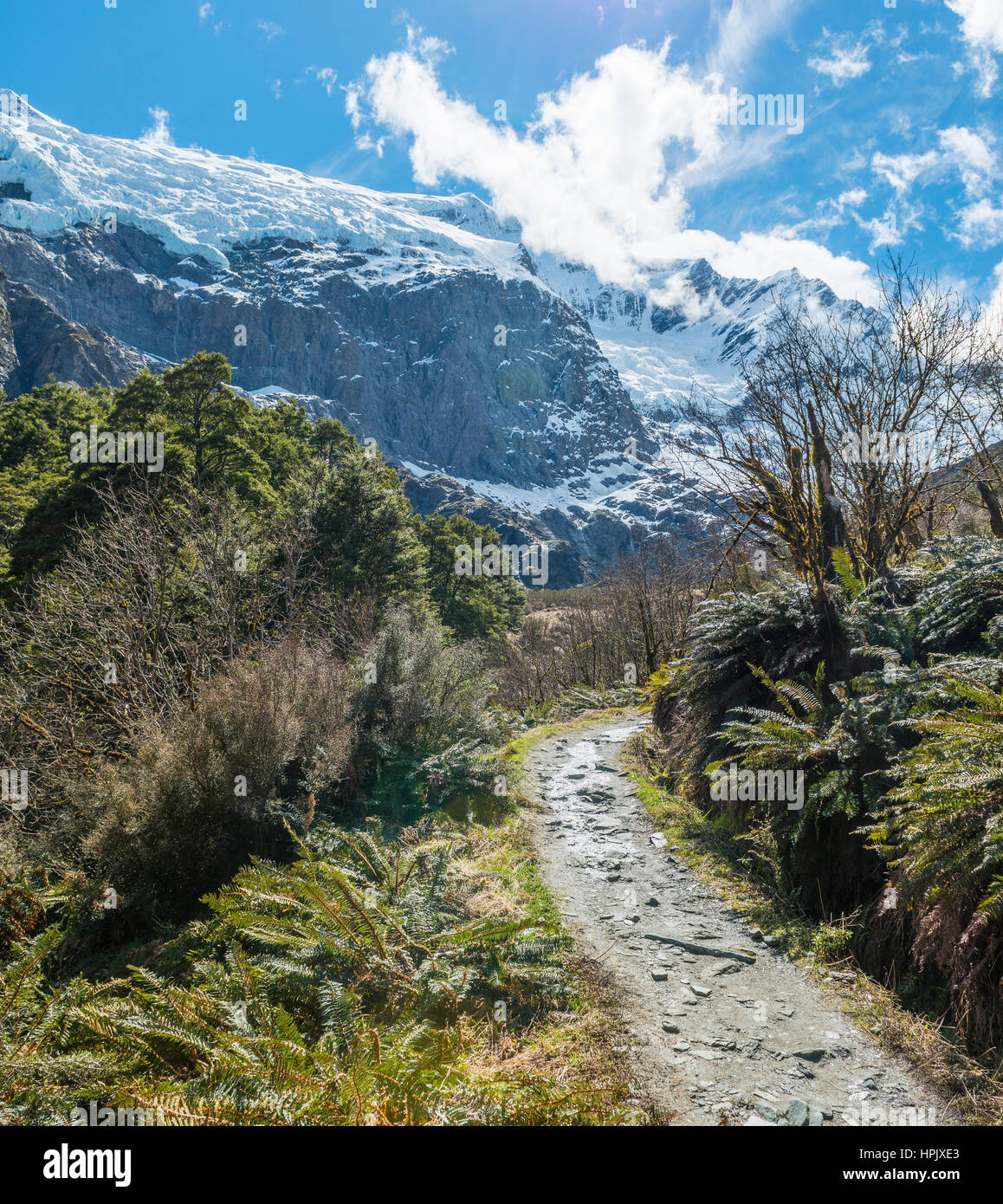 Hiking trail, Rob Roy Glacier, Mount Aspiring National Park, Otago, Southland, New Zealand Stock Photo