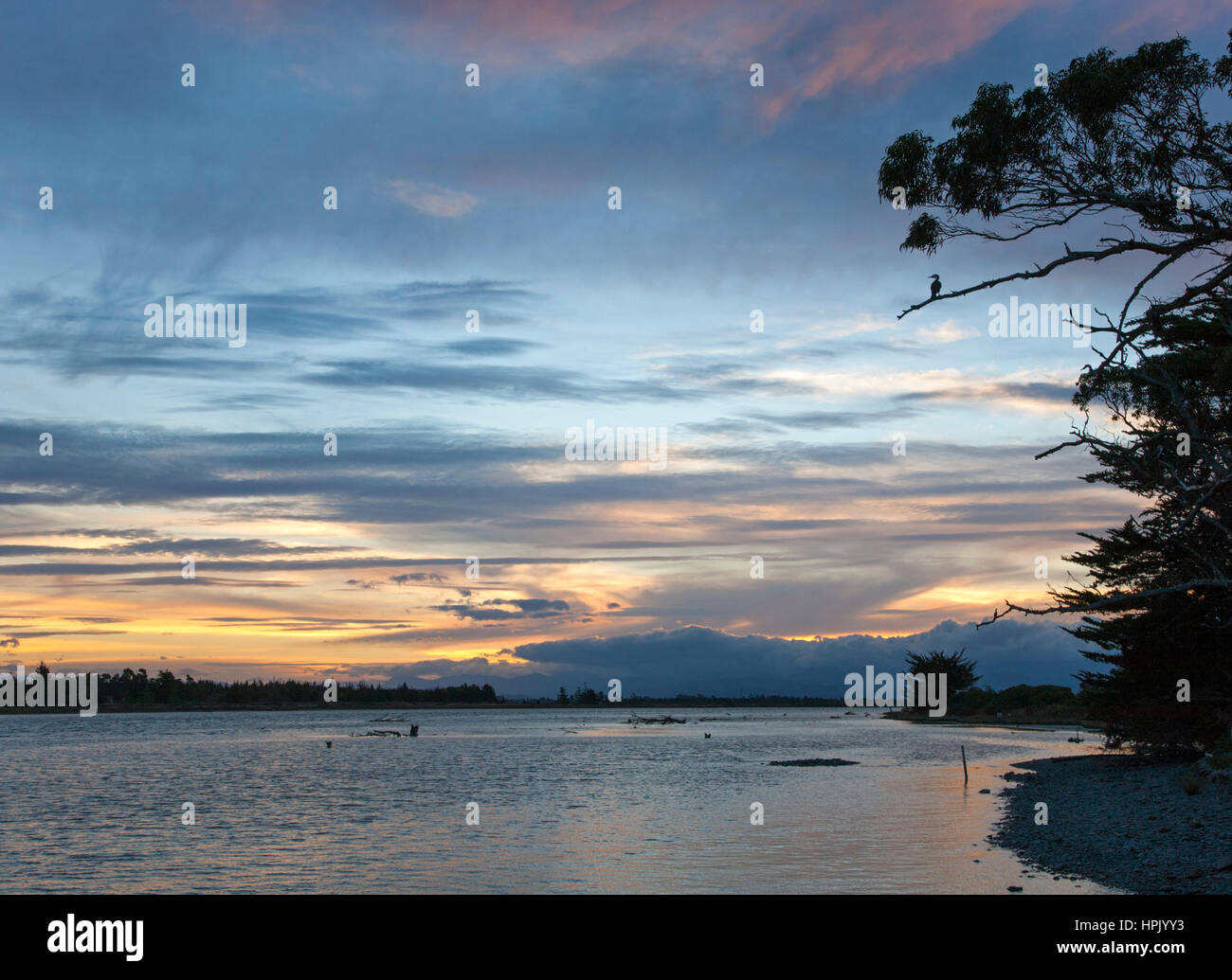 Blenheim, Marlborough, New Zealand. View up the Wairau River estuary at Wairau Bar, dusk, pied shag (Phalacrocorax Stock Photo