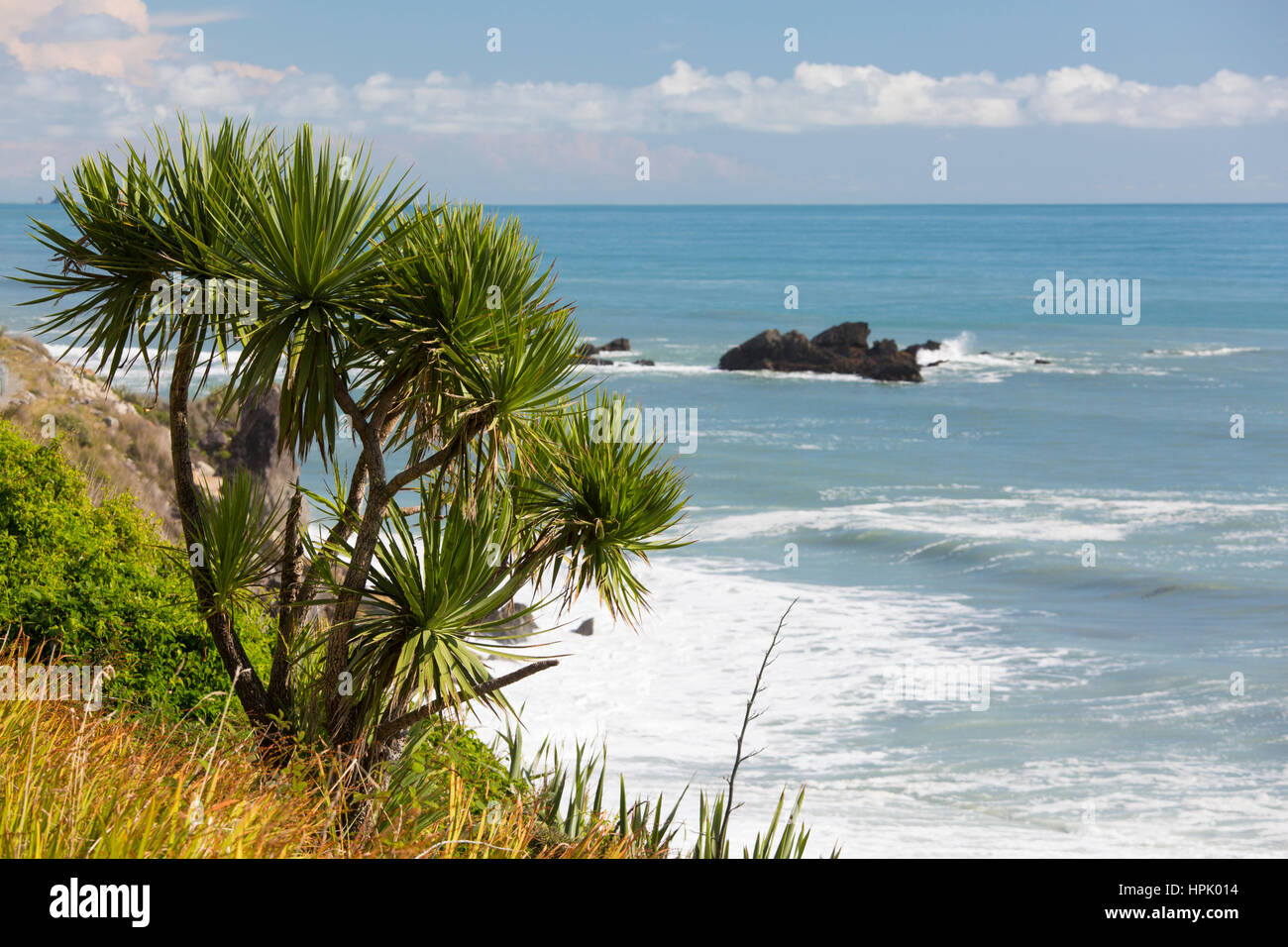 Greymouth, West Coast, New Zealand. Clifftop vegetation growing above the Tasman Sea near Seventeen Mile Bluff. - Stock Image