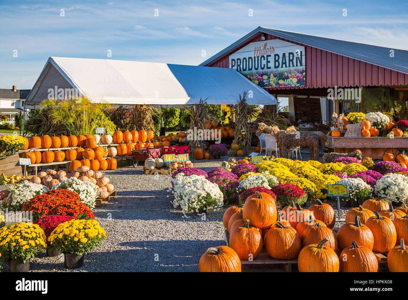 Pumpkins and fall market at Miller's Produce Barn in rural, Ohio, USA. - Stock Image