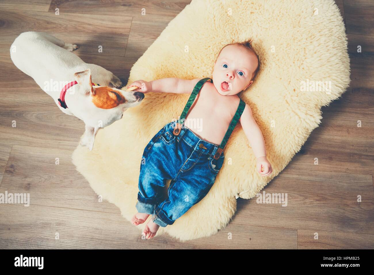 Little boy and dog at home. Adorable baby resting on the fur blanket. Stock Photo