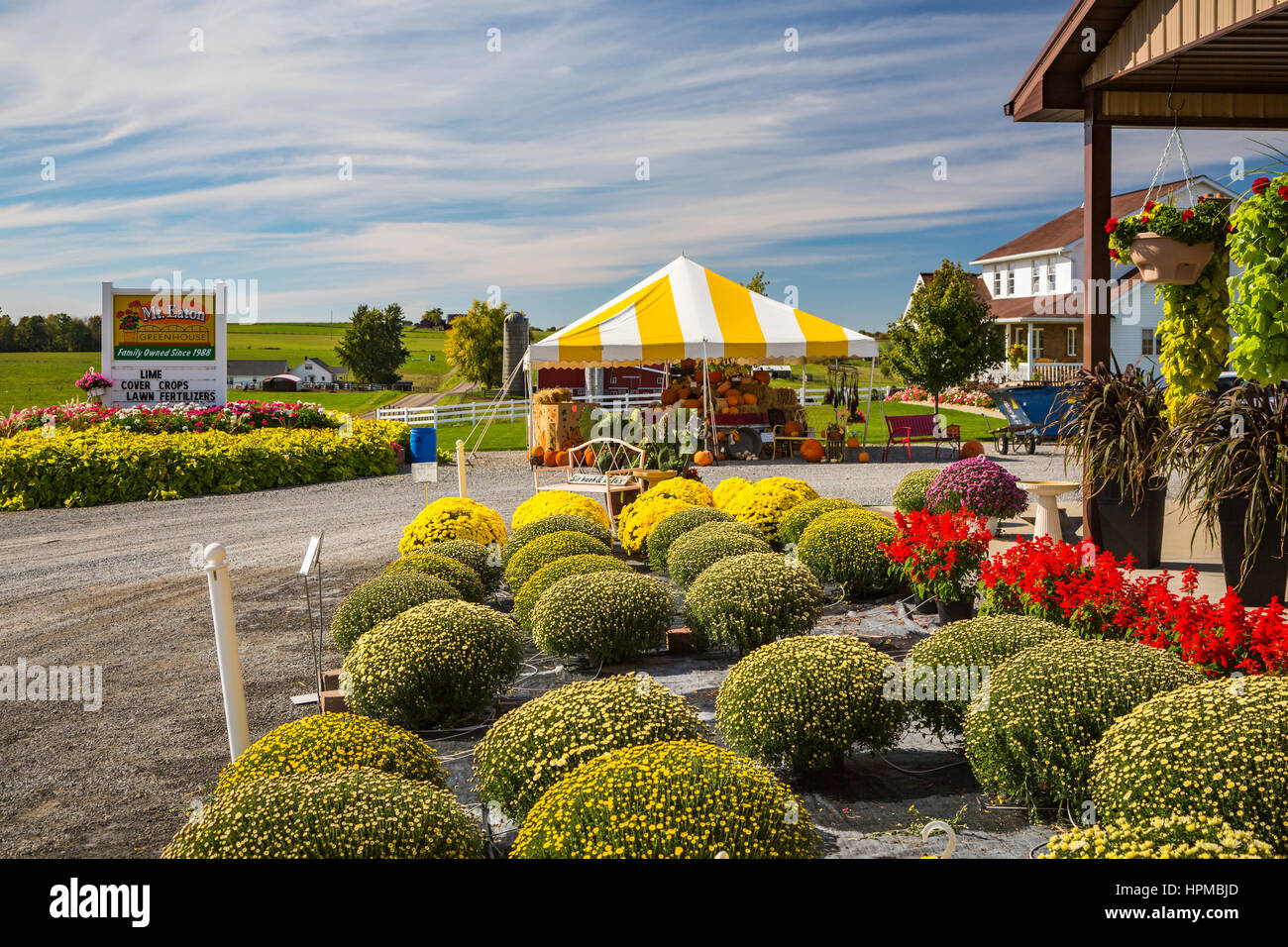 Flowers for sale at the Mt. Eaton Greenhouses , Ohio, USA. - Stock Image