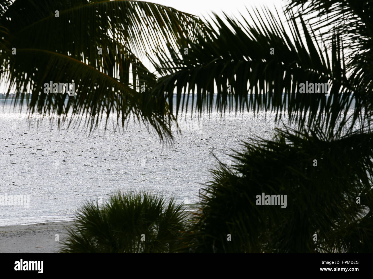 View of the Gulf of Mexico and the beach through palm leaves in Fort Myers Beach. Stock Photo