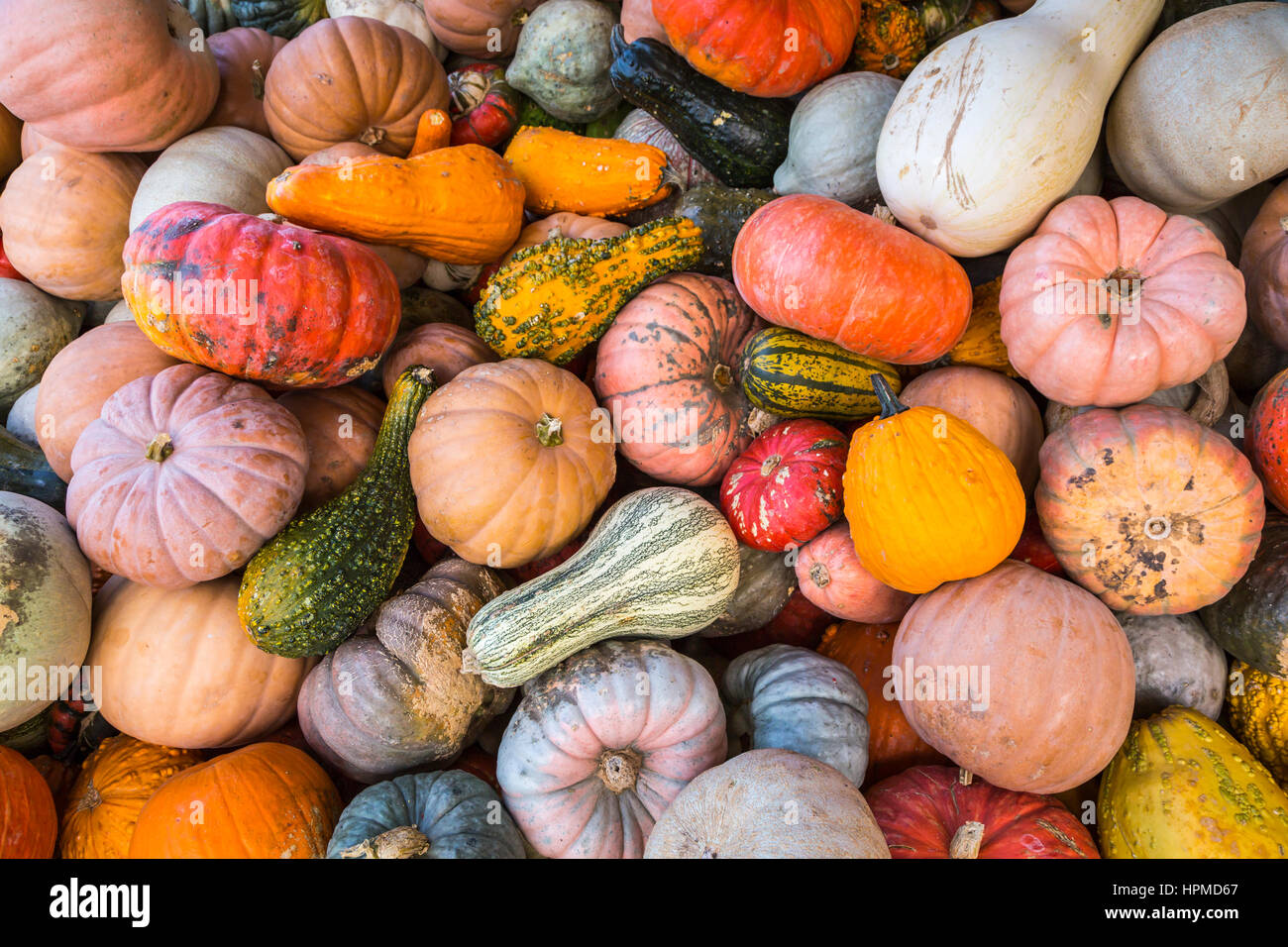 Close up of fall display of pumpkins, gourds and flowers at Hershberger's Farm in Millersburg, Ohio, USA. Stock Photo