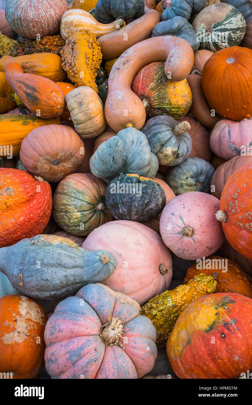 Close up of fall display of pumpkins, gourds and flowers at Hershberger's Farm in Millersburg, Ohio, USA. - Stock Image