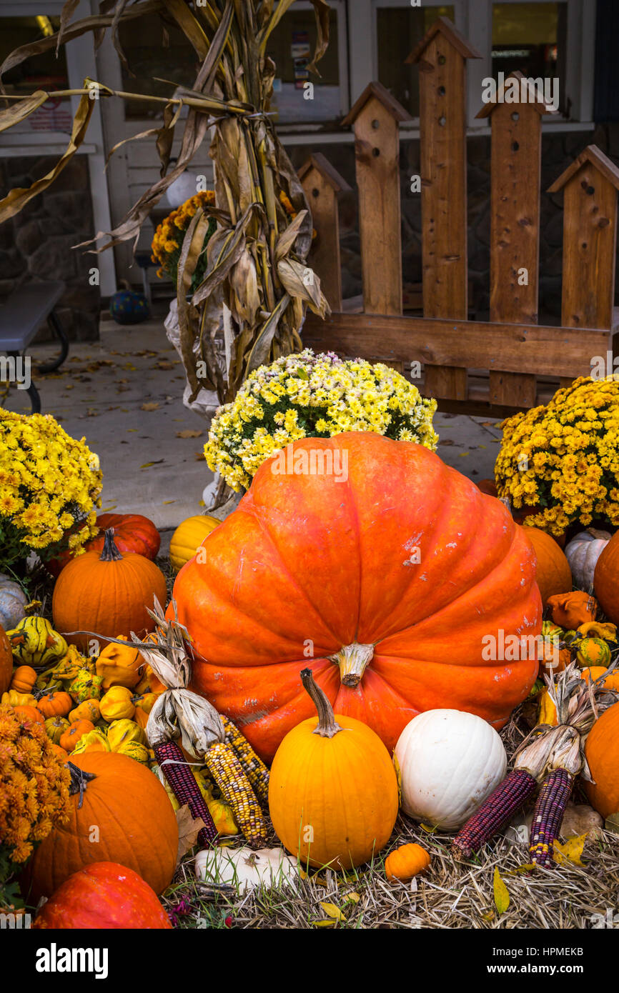Closeup of fall display of pumpkins, gourds and flowers at Hershberger's Farm in Millersburg, Ohio, USA. - Stock Image
