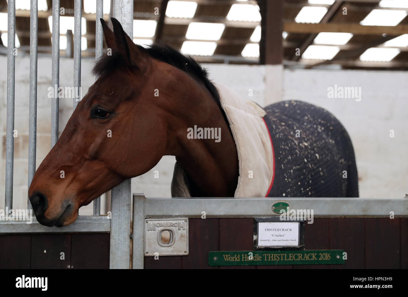 Thistlecrack during a stable visit to Colin Tizzard's stable at Milborne Port, Dorset. Stock Photo