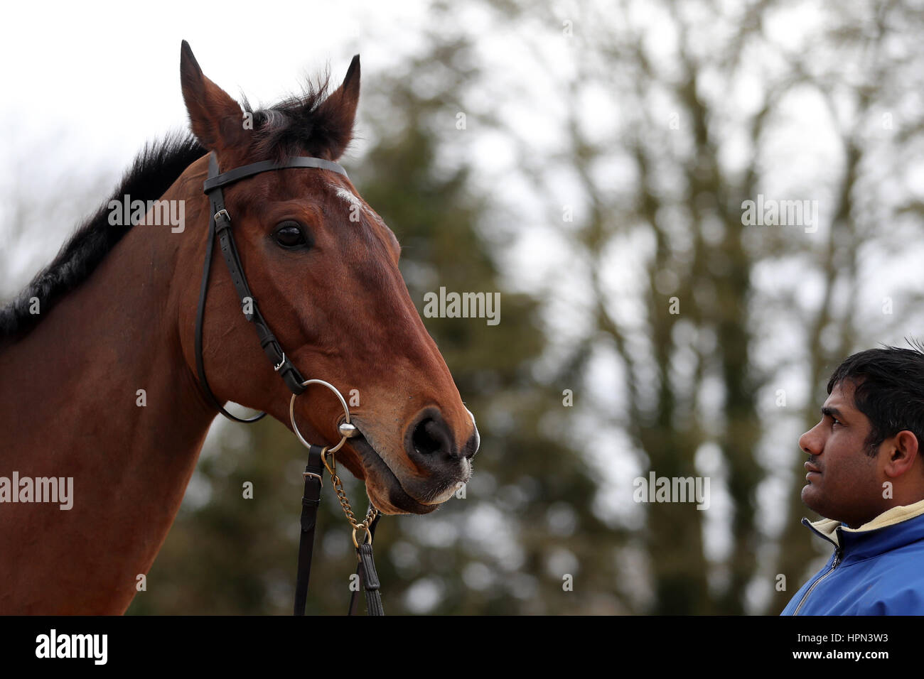 Cue Card with his handler during a stable visit to Colin Tizzard's stable at Milborne Port, Dorset. - Stock Image