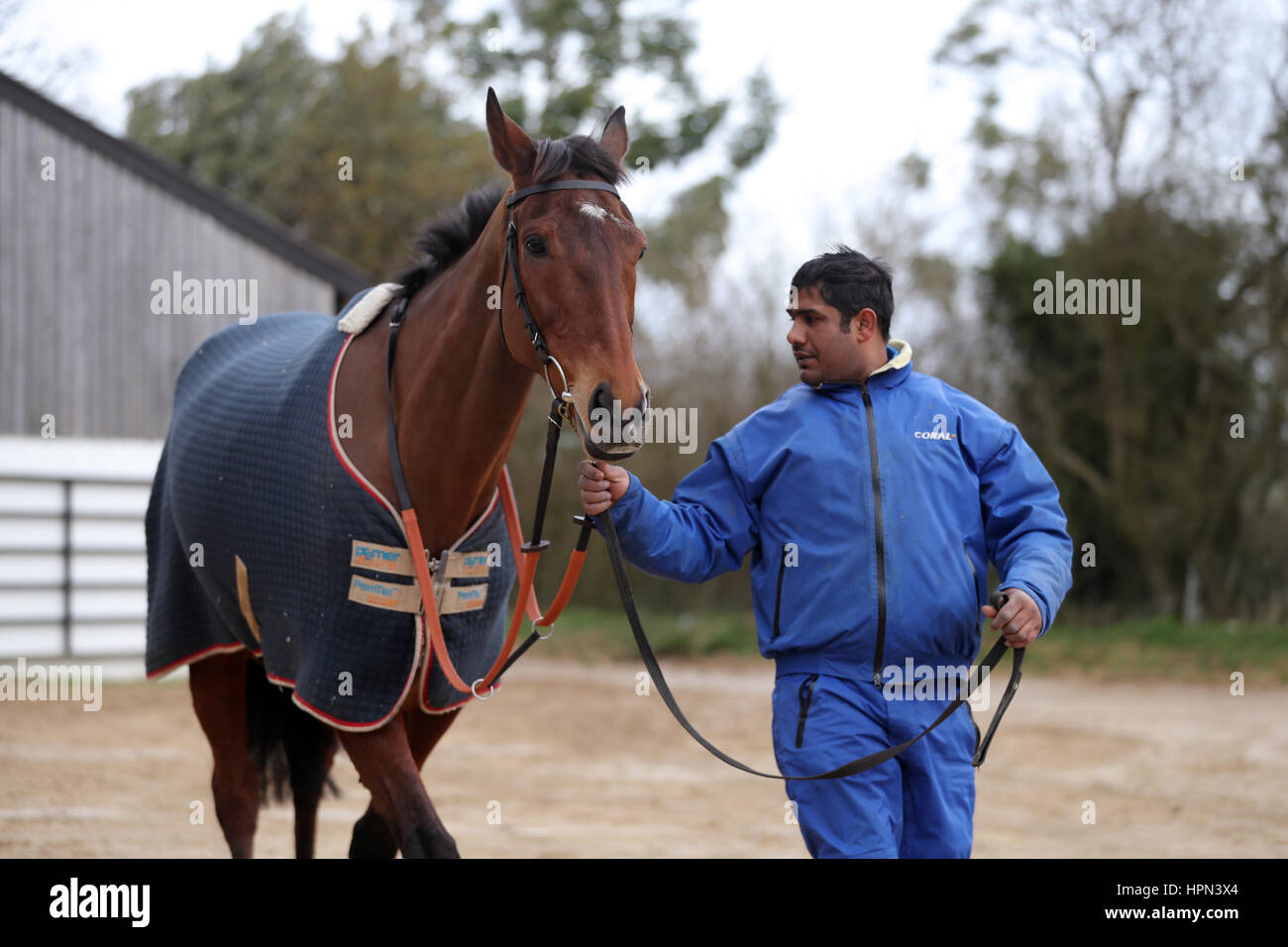 Cue Card is paraded with his handler during a stable visit to Colin Tizzard's stable at Milborne Port, Dorset. Stock Photo