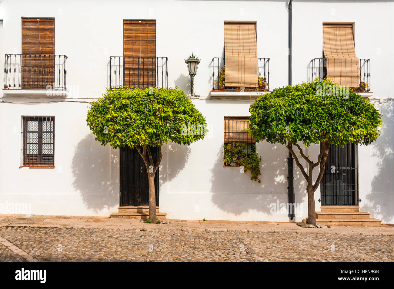 front of a white house and orange trees in Ronda, province of Malaga, Andalusia, Spain - Stock Image