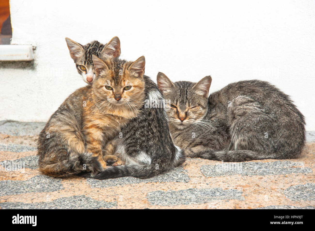 three cute, young, sleepy cats in the street, snuggling together - Stock Image