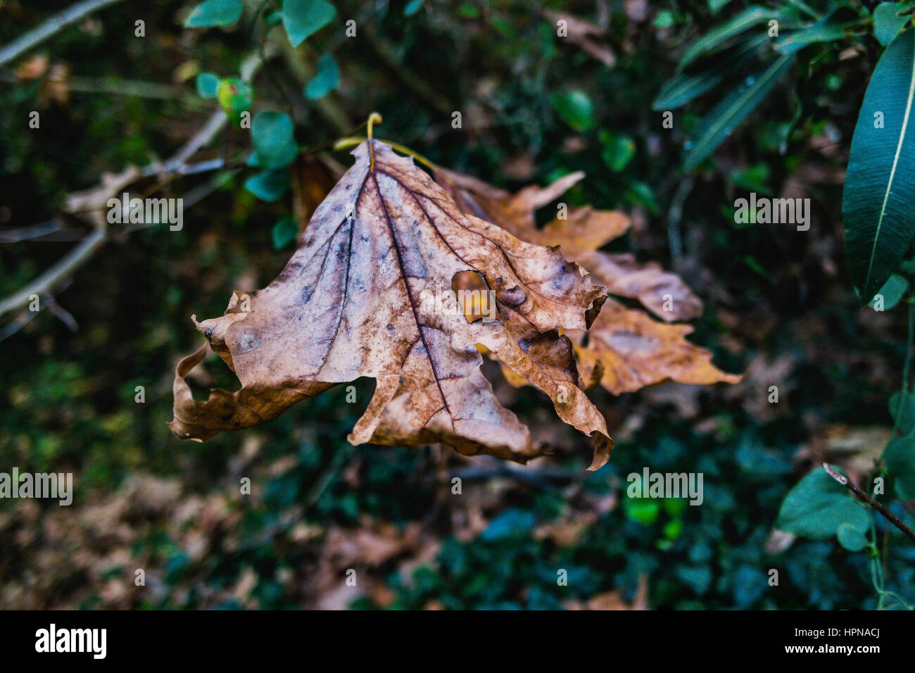 Tablo Stock Photos Tablo Stock Images Alamy