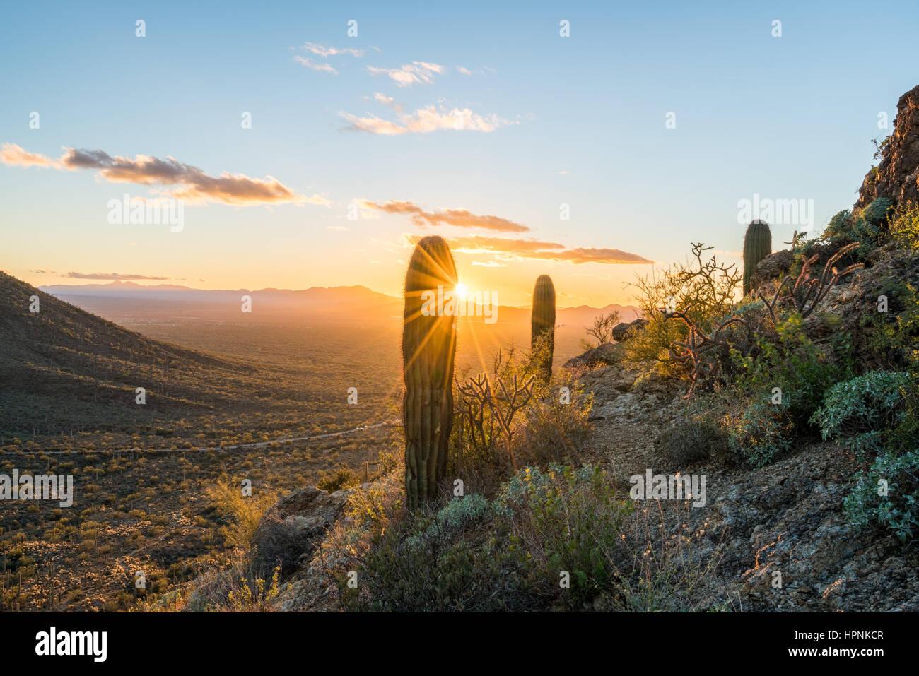 Saguaro cacti stand against setting sun at Gates Pass near Tucson Arizona Stock Photo