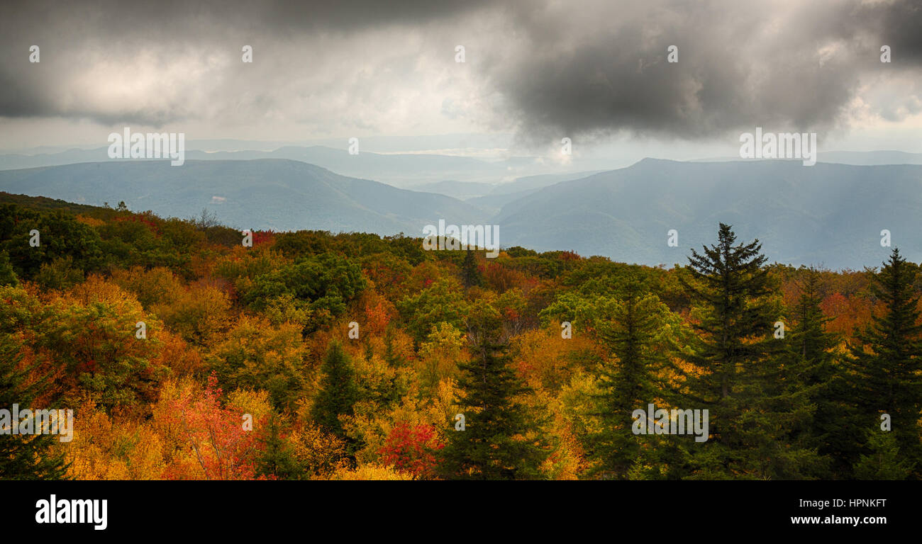Red autumn leaves across Dolly Sods Wilderness area in West Virginia with panorama to distant mountains - Stock Image