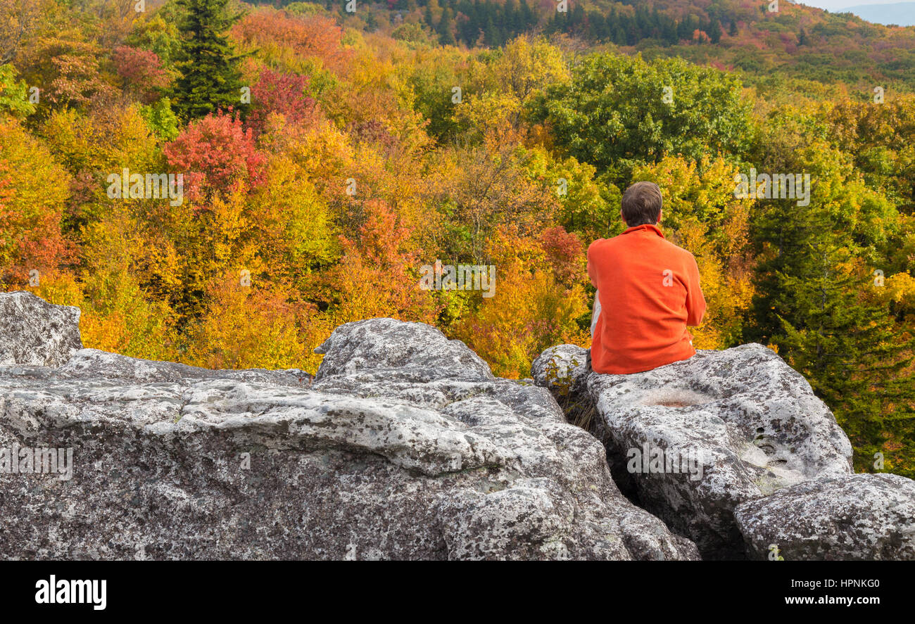 Red autumn leaves across Dolly Sods Wilderness area in West Virginia with hiker admiring the view - Stock Image