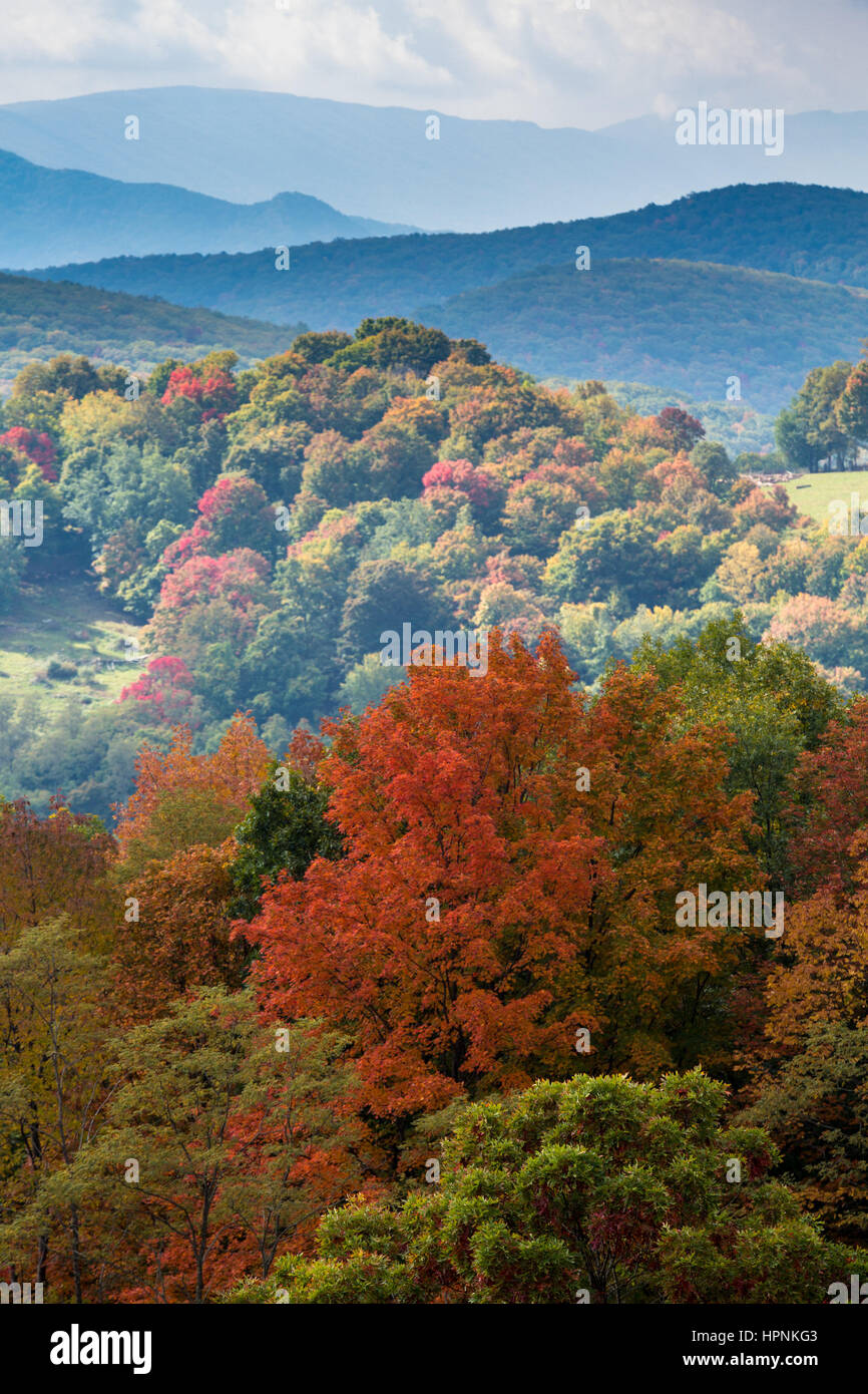 Red autumn fall leaves in West Virginia with shadowed hillside in distance - Stock Image