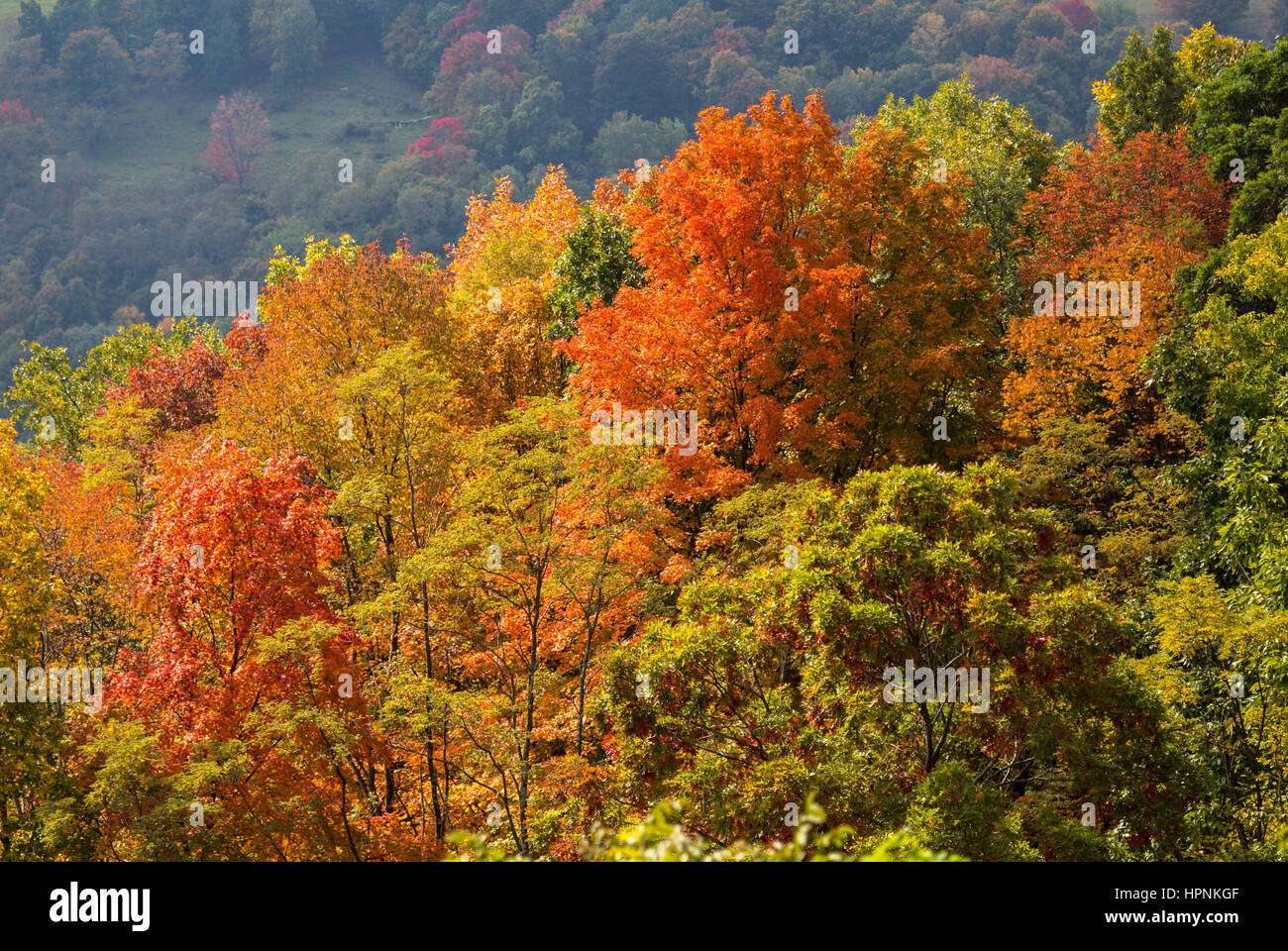Red autumn fall leaves in West Virginia with shadowed hillside in distance Stock Photo
