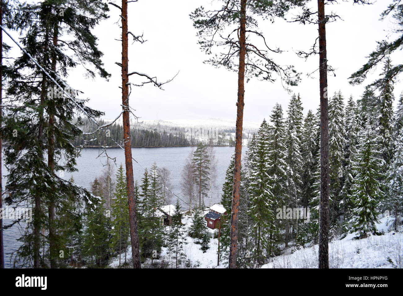 A lake from the forest on winter. - Stock Image