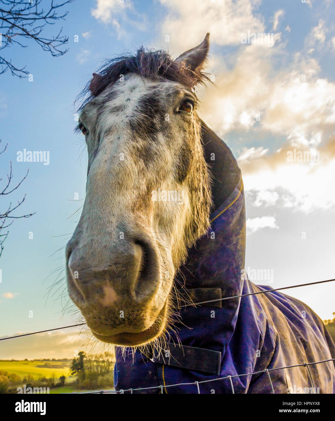Horses looking down the lens - Stock Image