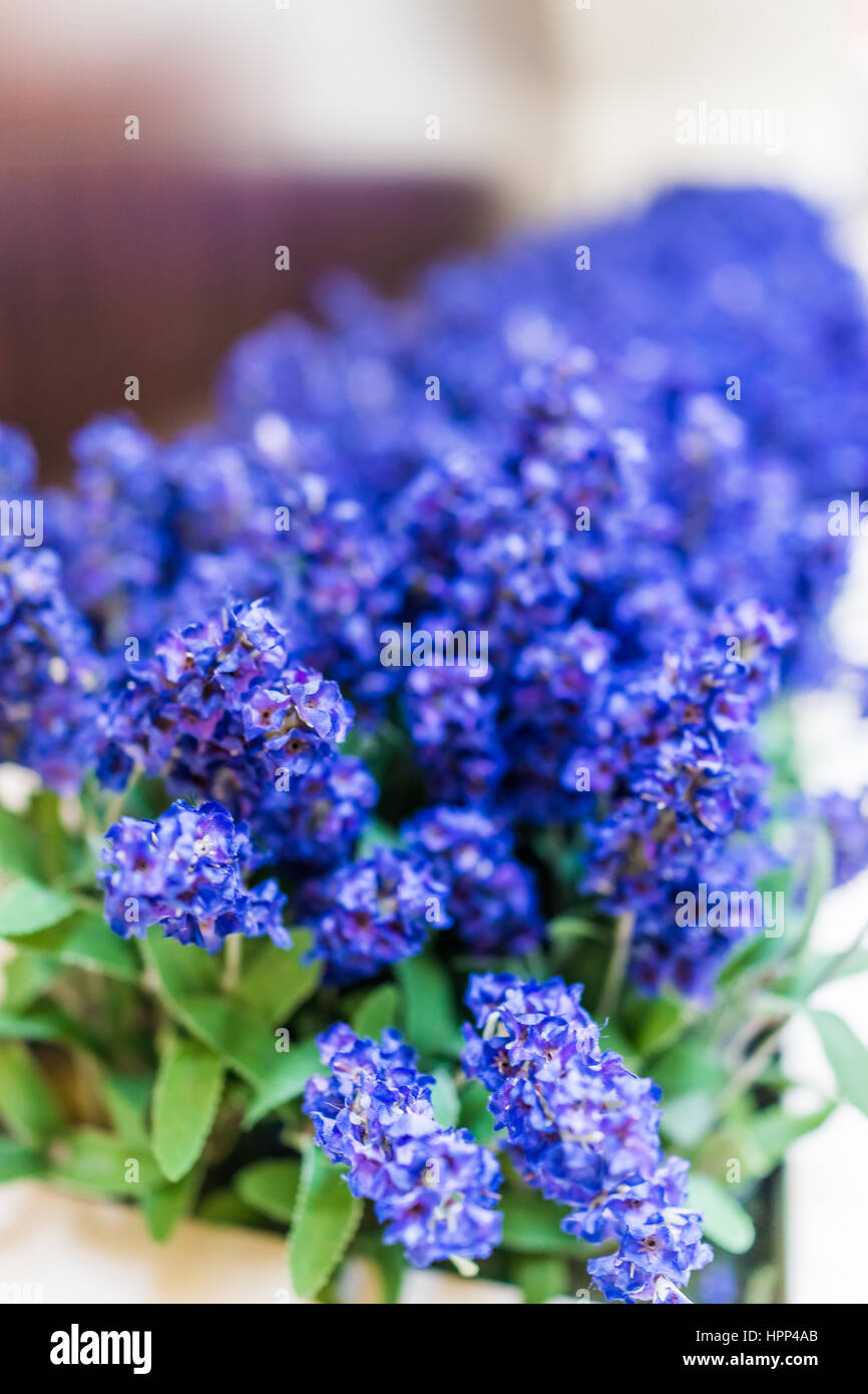 Blue Purple Tall Long Fake Lupine Flowers As Decoration Stock Photo