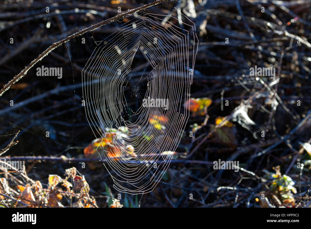 Spider Web - Stock Image