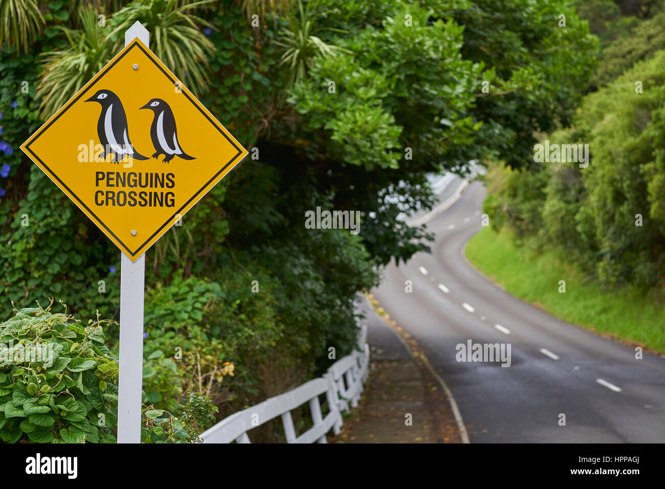 new zealand road with funny penguins crossing sign HPPAGJ - Free funny new zealand photos
