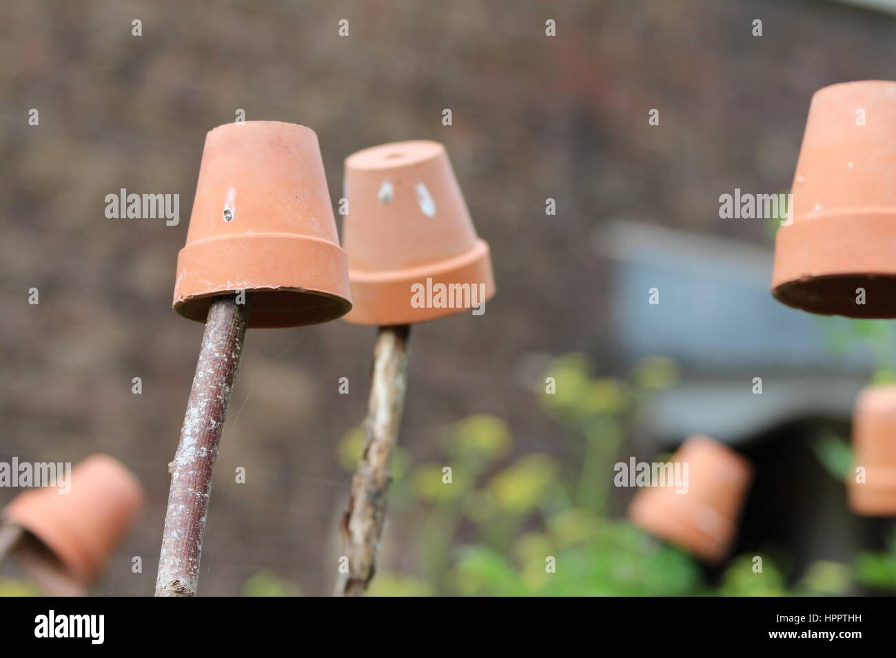 Terracotta plant pots used as a deterrent to keep birds away from plants - Stock Image