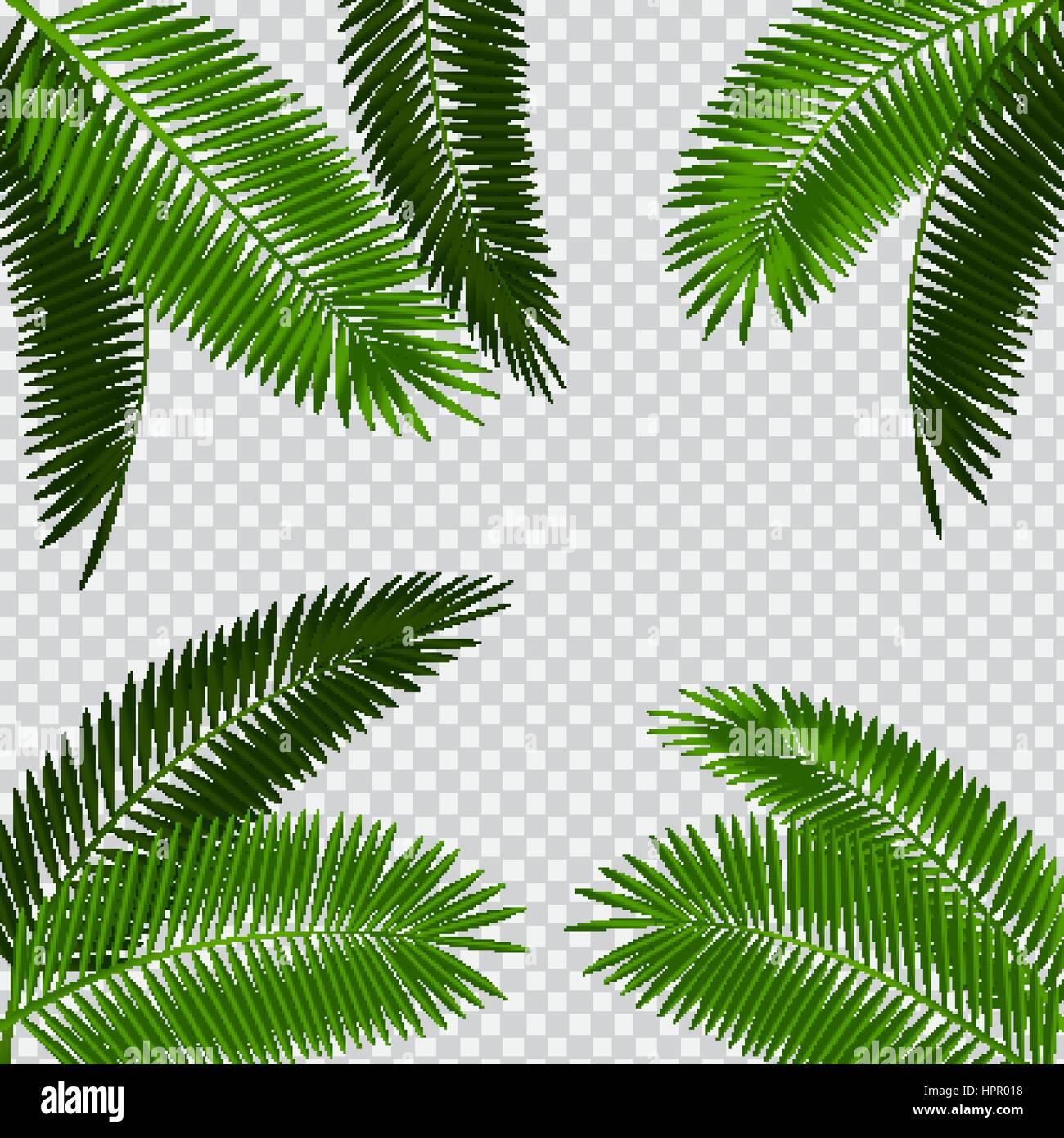 palm leaf vector illustration on transparent background stock vector