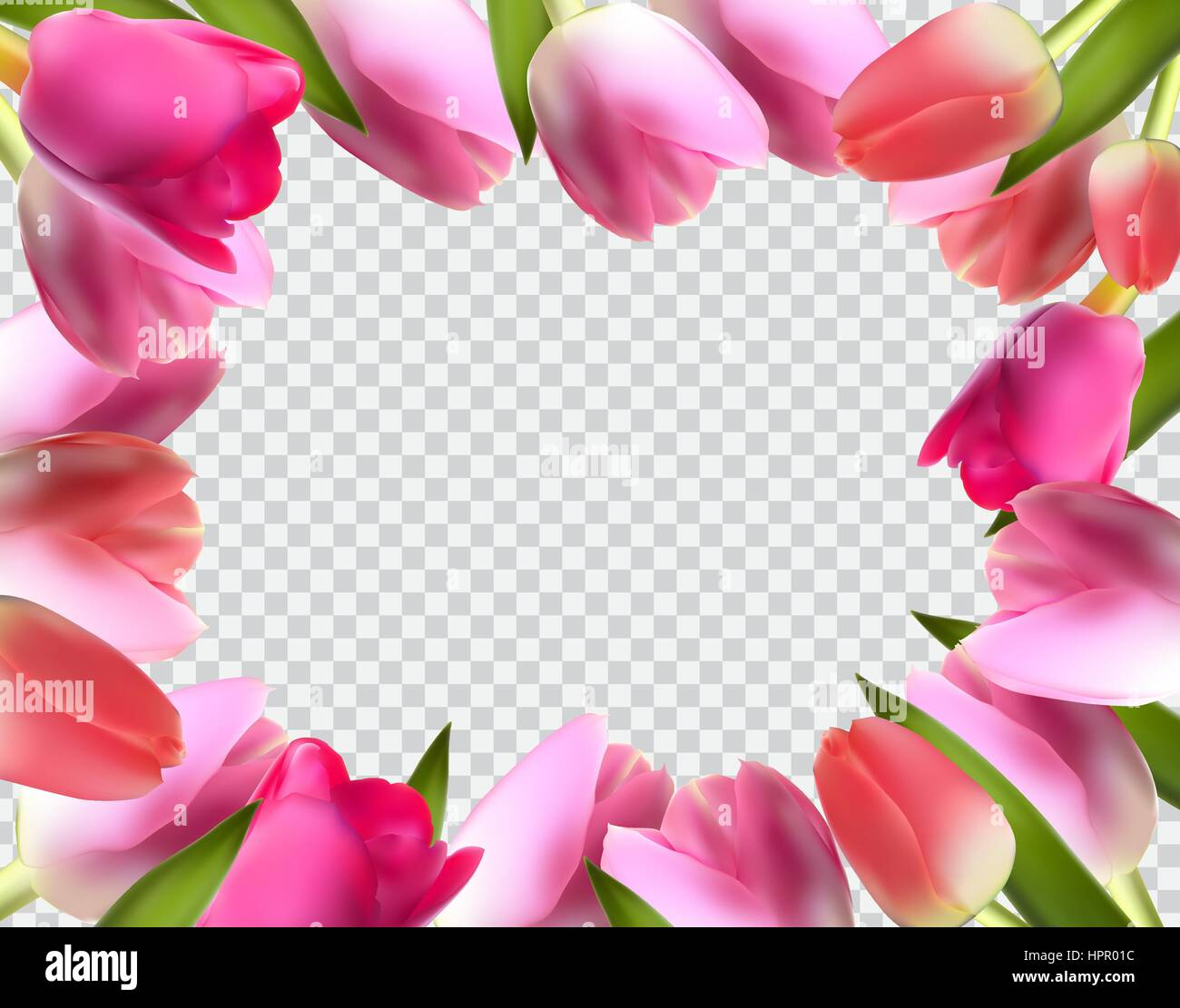 Beautiful Pink Realistic Tulip Frame Vector Illustration - Stock Vector