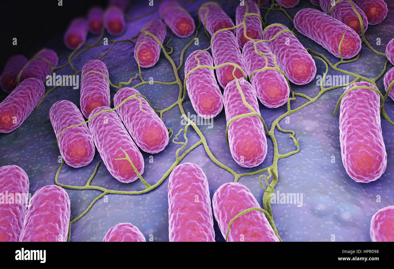Culture of Salmonella bacteria. 3D illustration Stock Photo
