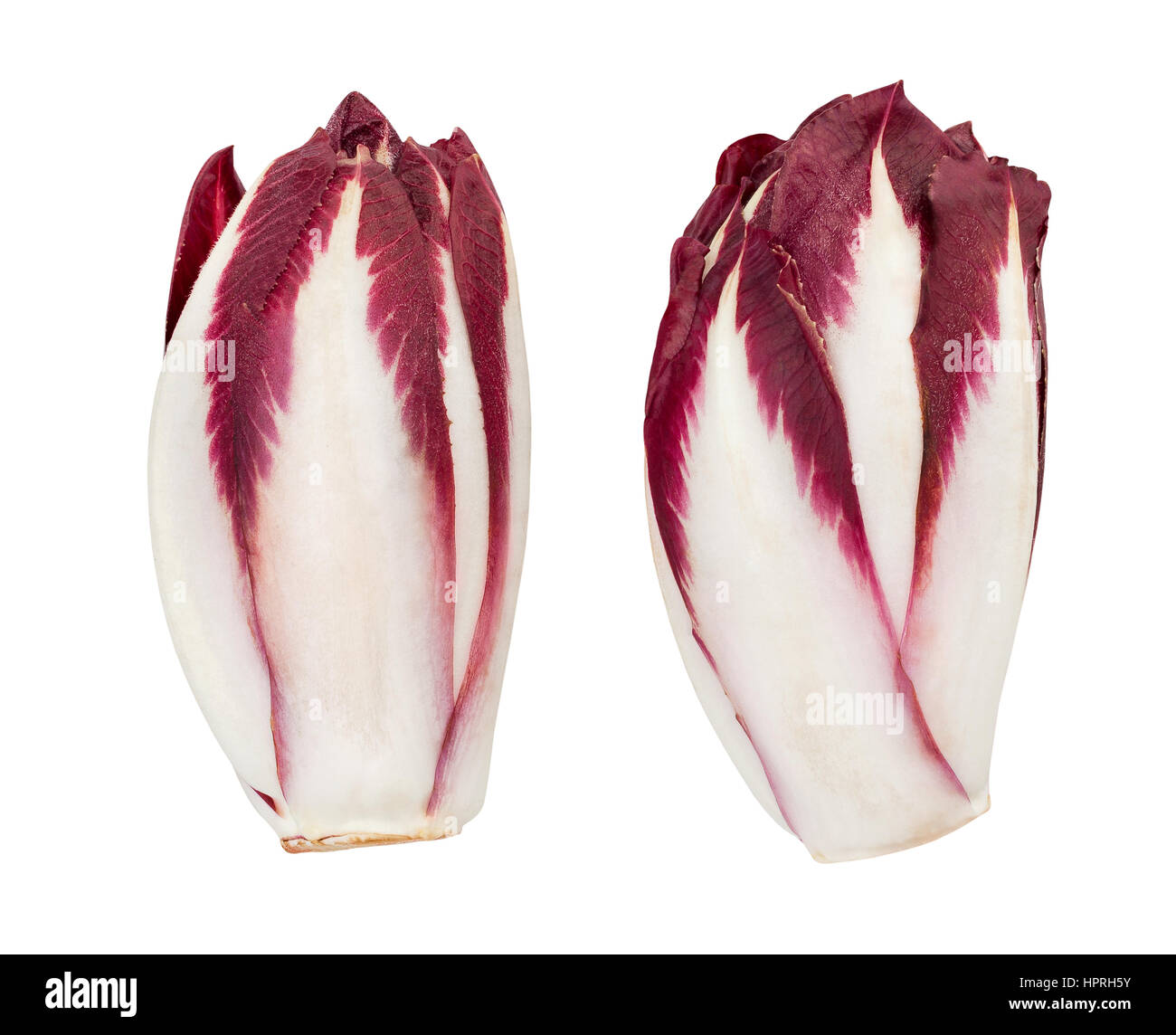 red chicory isolated - Stock Image
